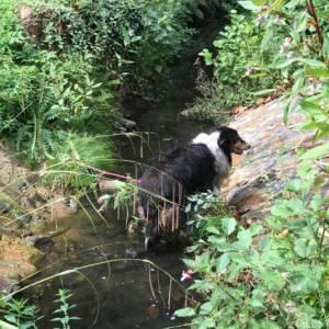 Feuerwehr Lohne rettet Hund aus Bach an der Wassermühle