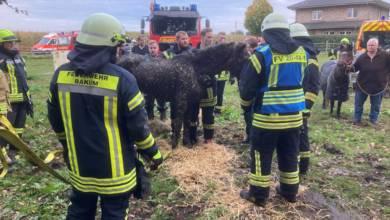 Pferde aus Güllegrube gerettet